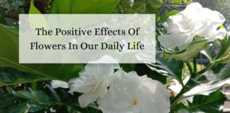 The Positive Effects Of Flowers In Our Daily Life